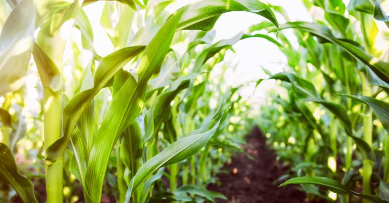 Illustration de l'article Semaine de l'agriculture, rendez-vous digital