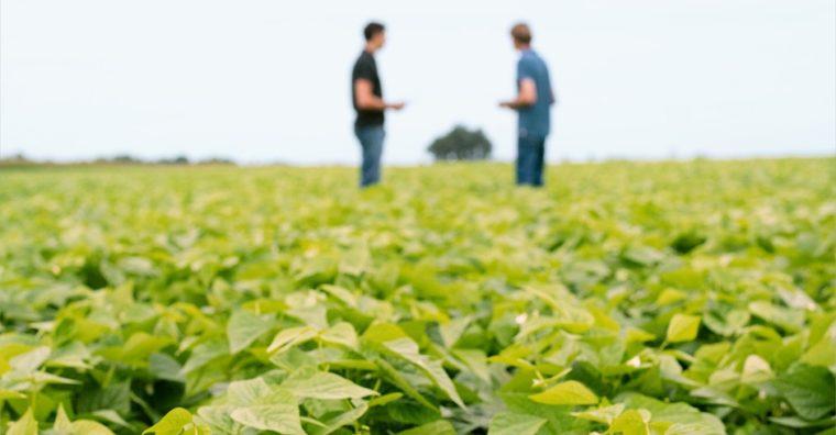 Illustration de l'article Agroalimentaire : Bonduelle signe un accord avec Euralis sur la rémunération des producteurs