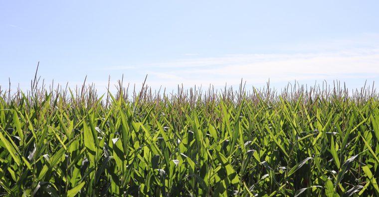 Illustration de l'article Agriculture : Appel à projets de la fondation pour une agriculture durable