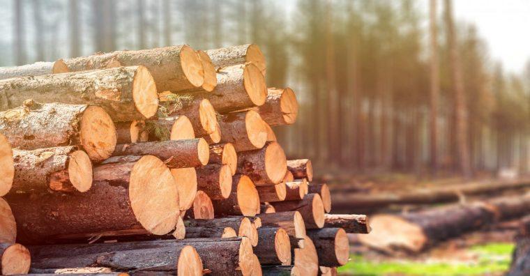 Illustration de l'article La flambée du bois