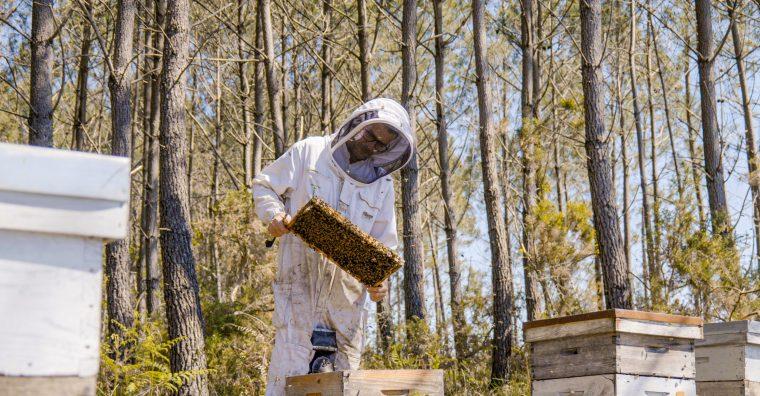 Illustration de l'article [ Interview ] Thomas Mollet, apiculteur à Pontenx-les-Forges : l'apiculture dans la tourmente